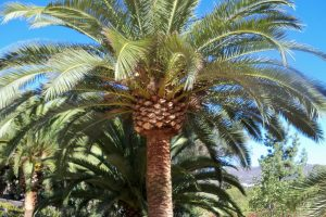 Palm Tree Services