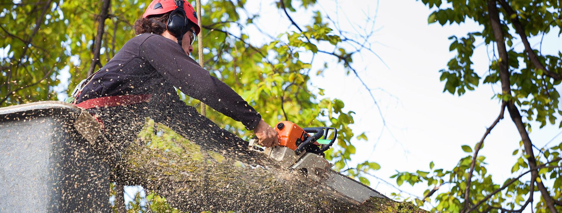 Providing Tree Care Services Since 1986
